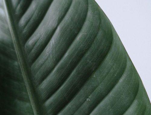 Mooie-kamerplanten